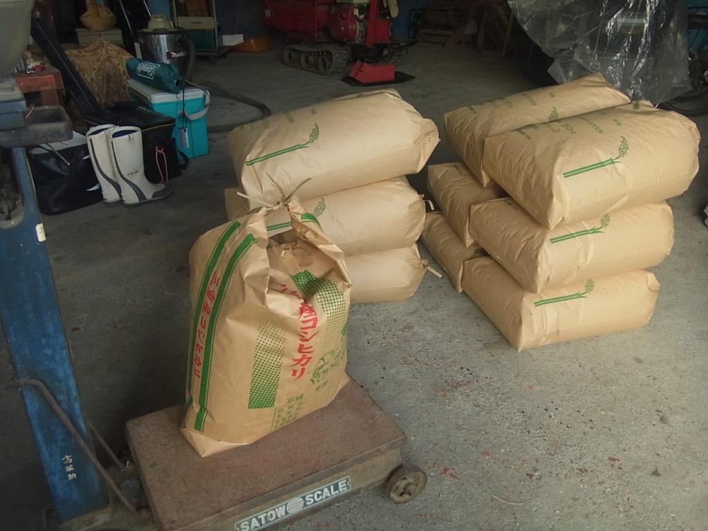 米袋に籾を移し替える。