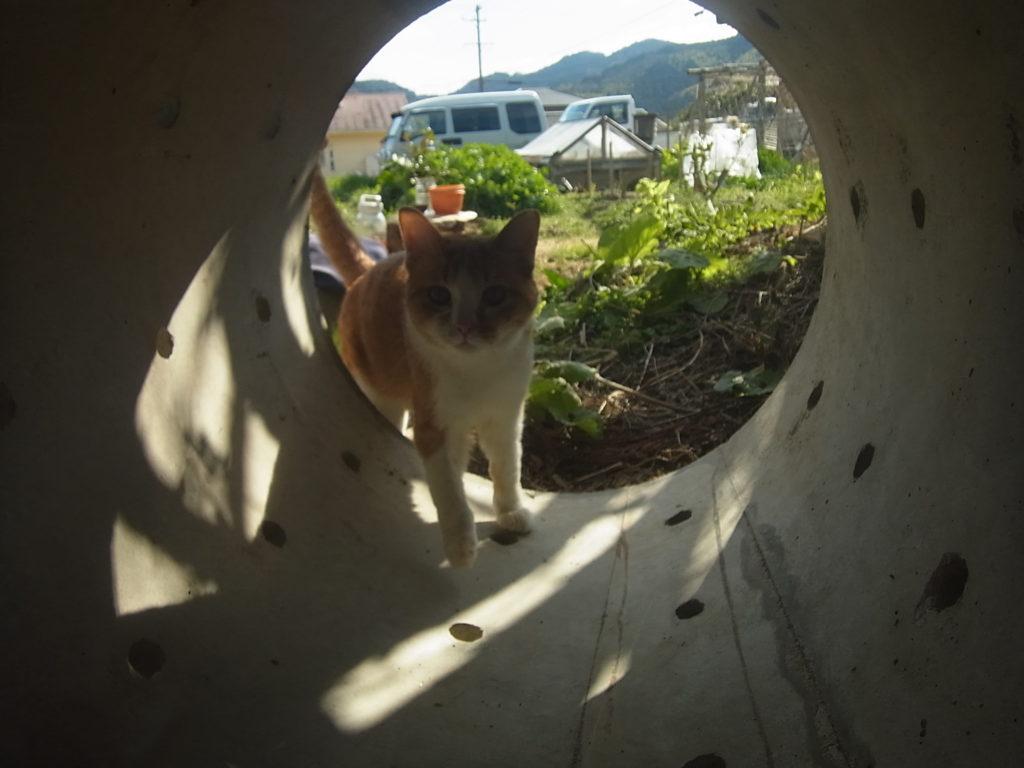 井戸側と茶トラ白猫。