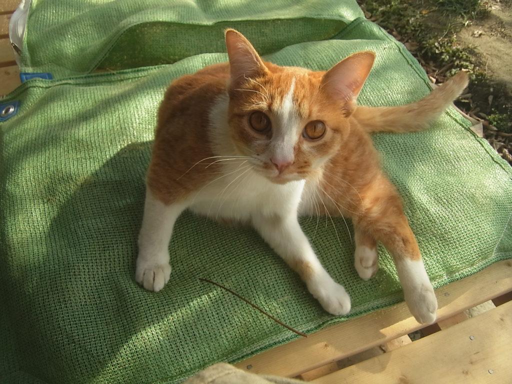 縁側の豆の上で休む可愛い猫のぢん。