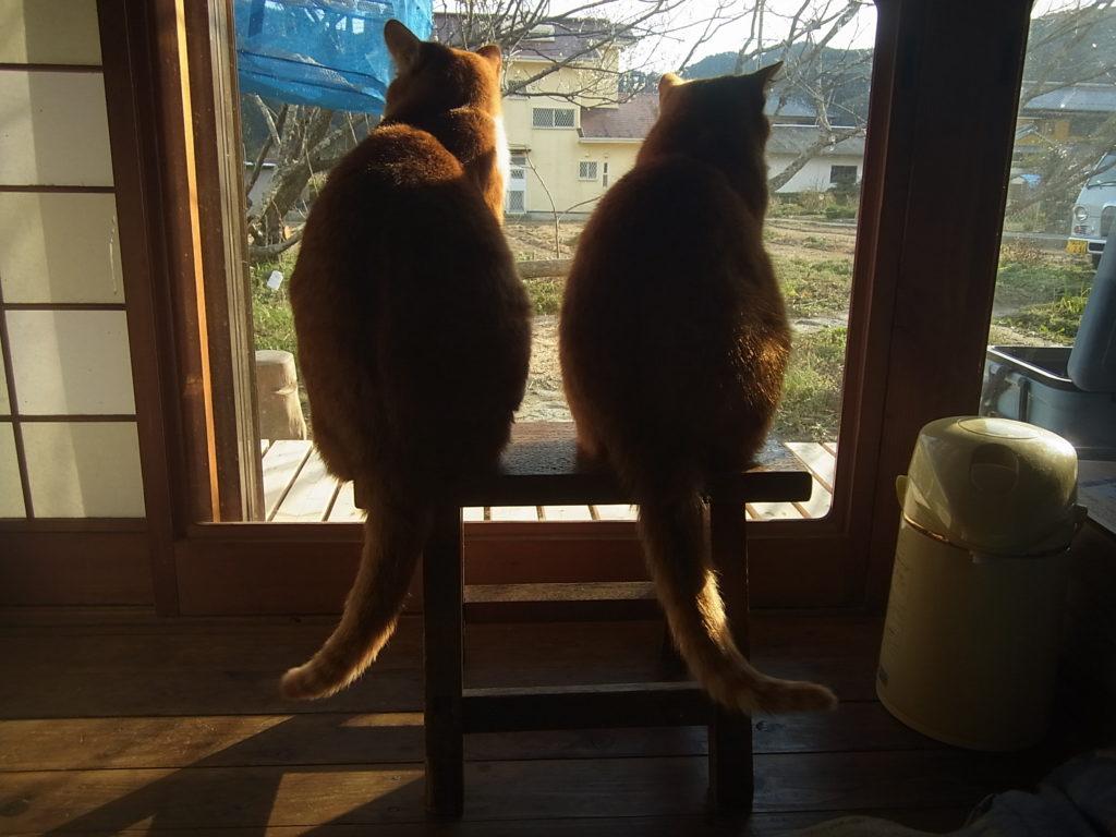 茶トラ猫の親子そろって外を眺める。