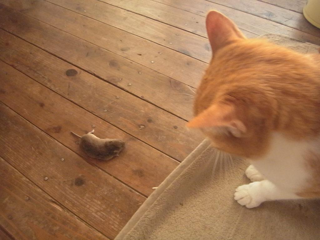 ネズミVS猫。