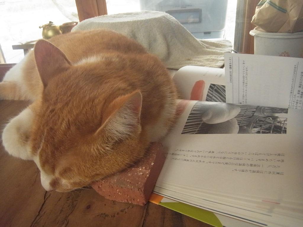 レンガを枕に昼寝する猫。