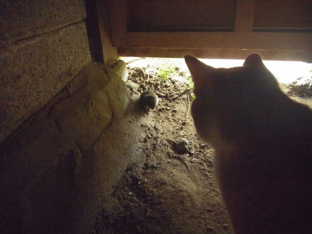 ネズミVS猫2。