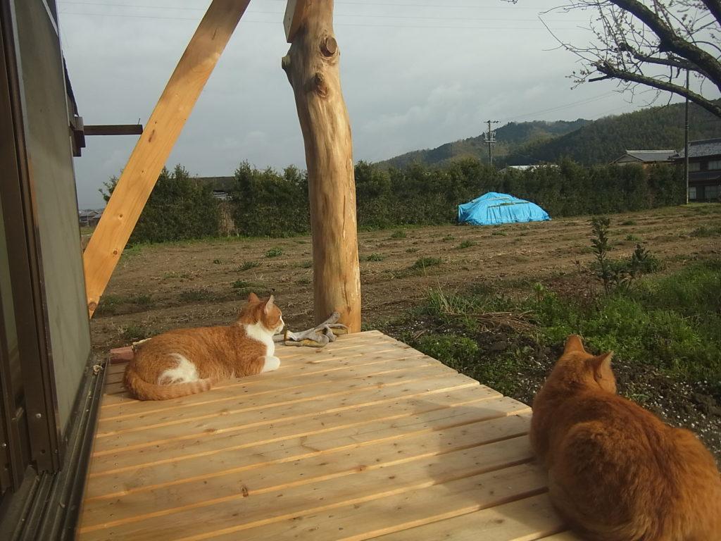 縁側で、休む茶トラ猫の親子。
