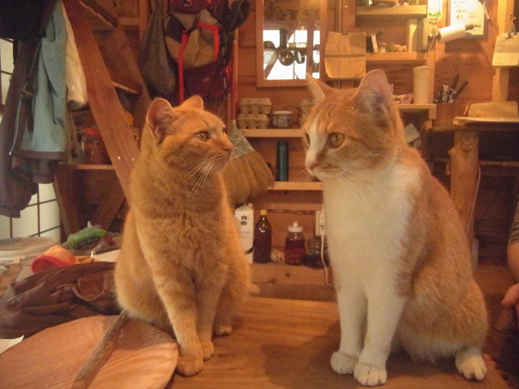 スモールハウスに馴染む茶トラ猫の親子。