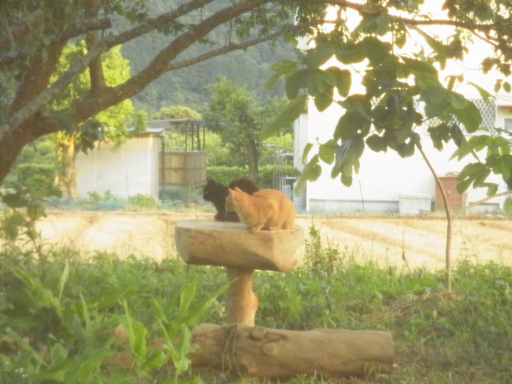 黒猫と茶トラ猫の2ショット。