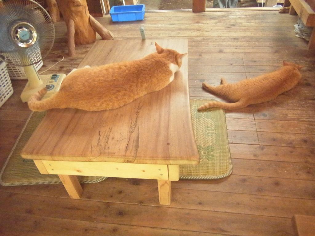 親子で同じ格好で眠る茶トラ猫。