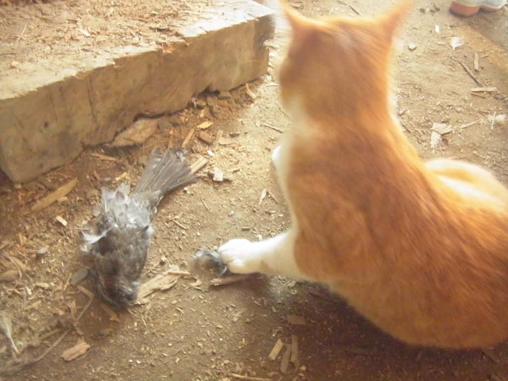 鳥を仕留めた猫。