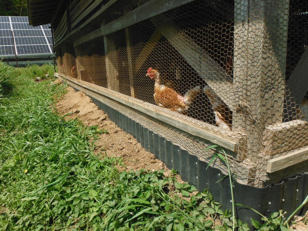 他の成鶏舎も獣対策を進める。