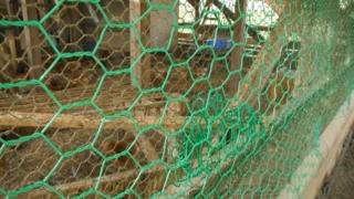 鶏小屋の外敵対策~金網を2重にする~