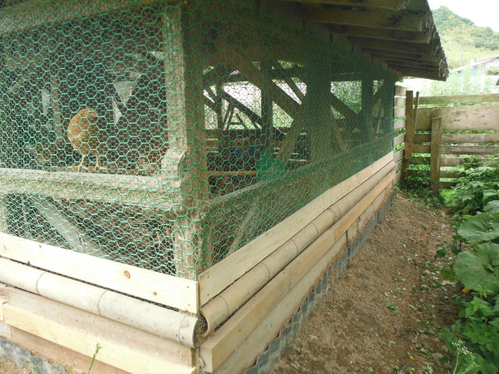 鶏小屋の外敵対策完了。