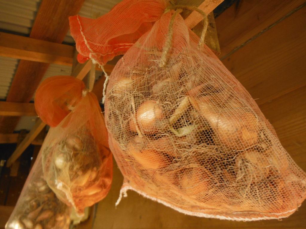 わけぎの種球を乾燥保存。