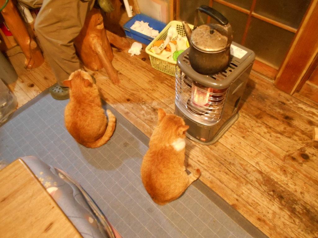 石油ストーブの前で暖をとる猫。