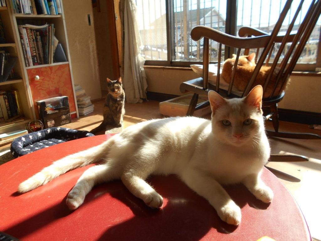 スクスク成長して大きくなった猫ちゃん達。