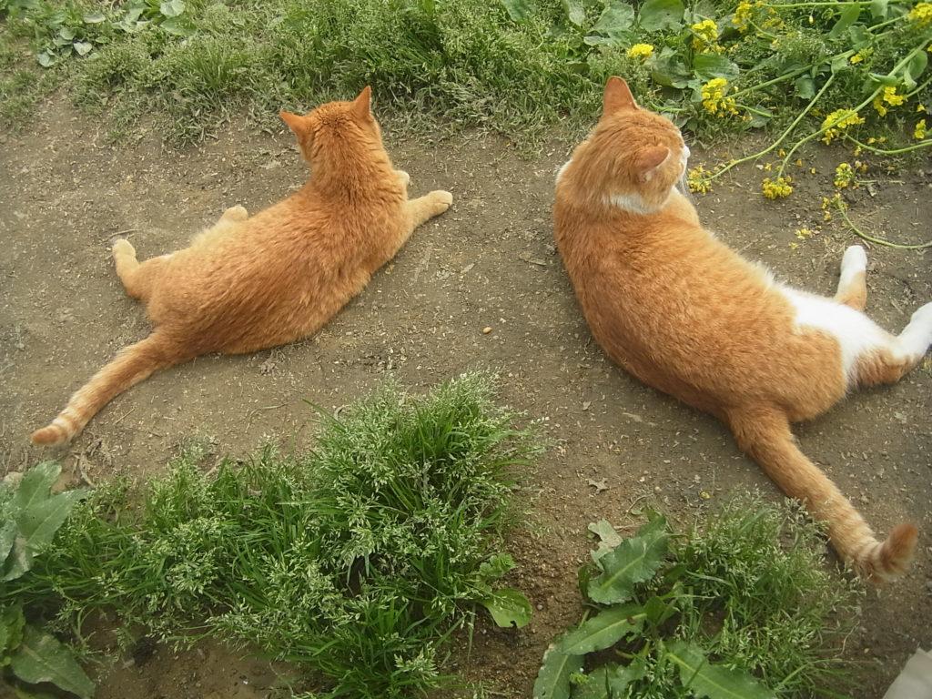 猫の親子、線対称になって休み中。