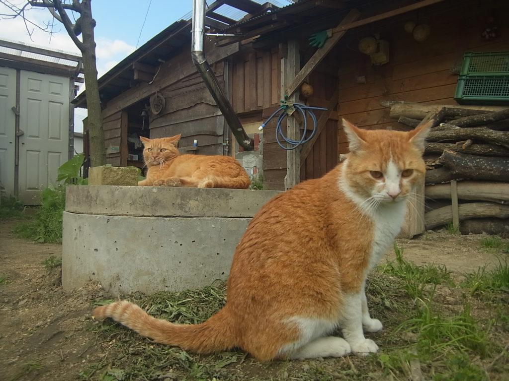 井戸の周辺で休む猫2匹。