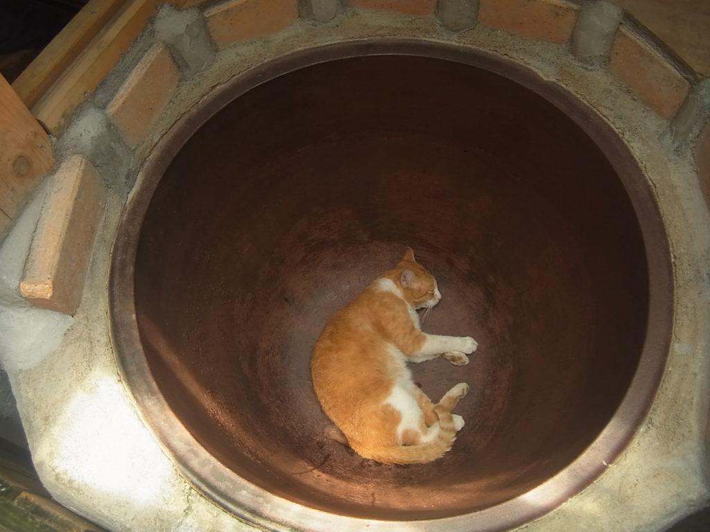 ぢんが五右衛門風呂の釜の中で涼をとる。