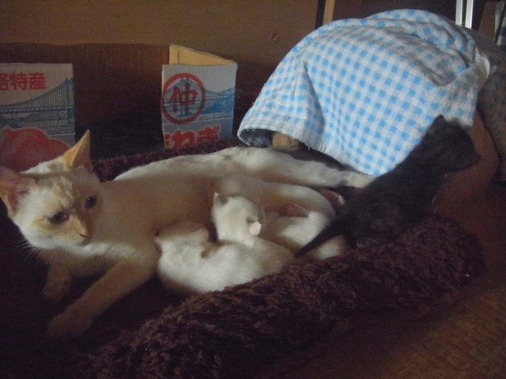実家の猫が子供を産む。