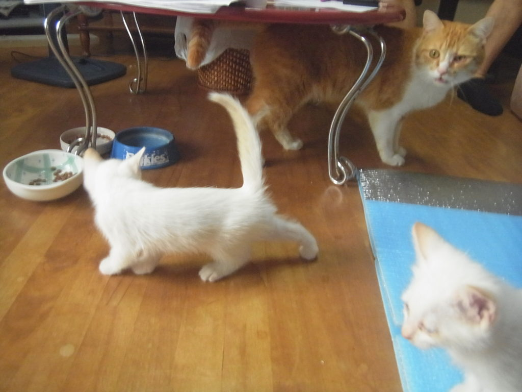 父猫と子猫2匹。