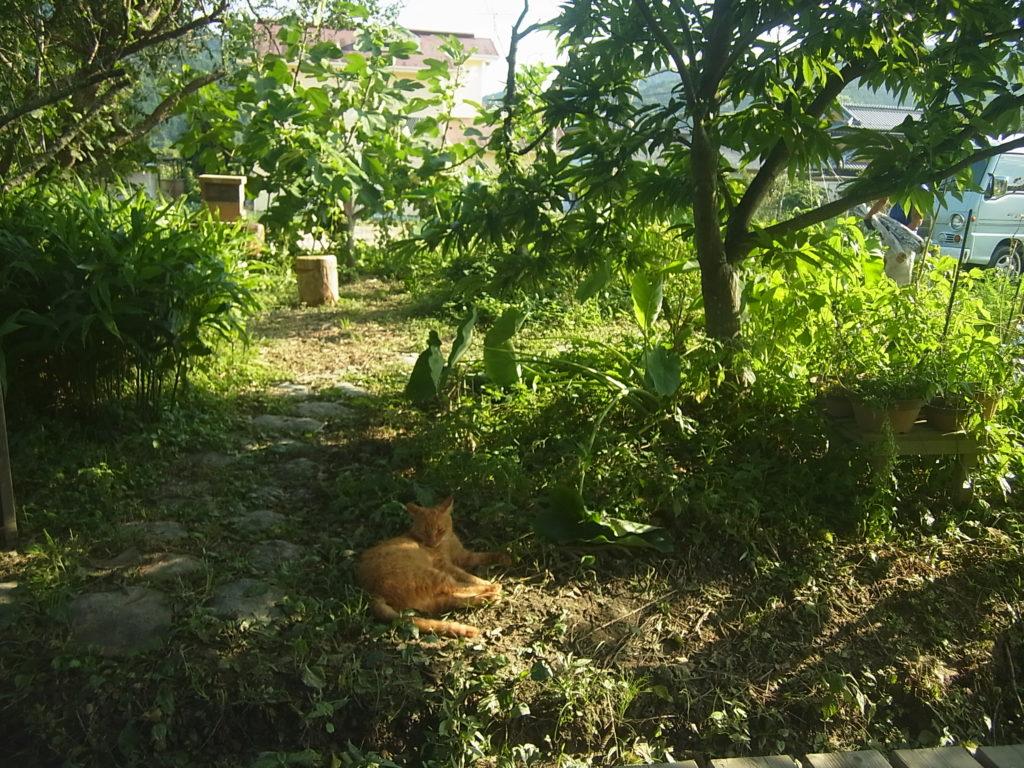 庭の木陰で涼をとる猫。