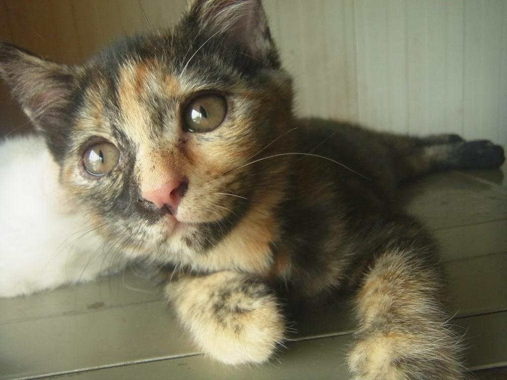 かわいいサビ猫ちゃん。