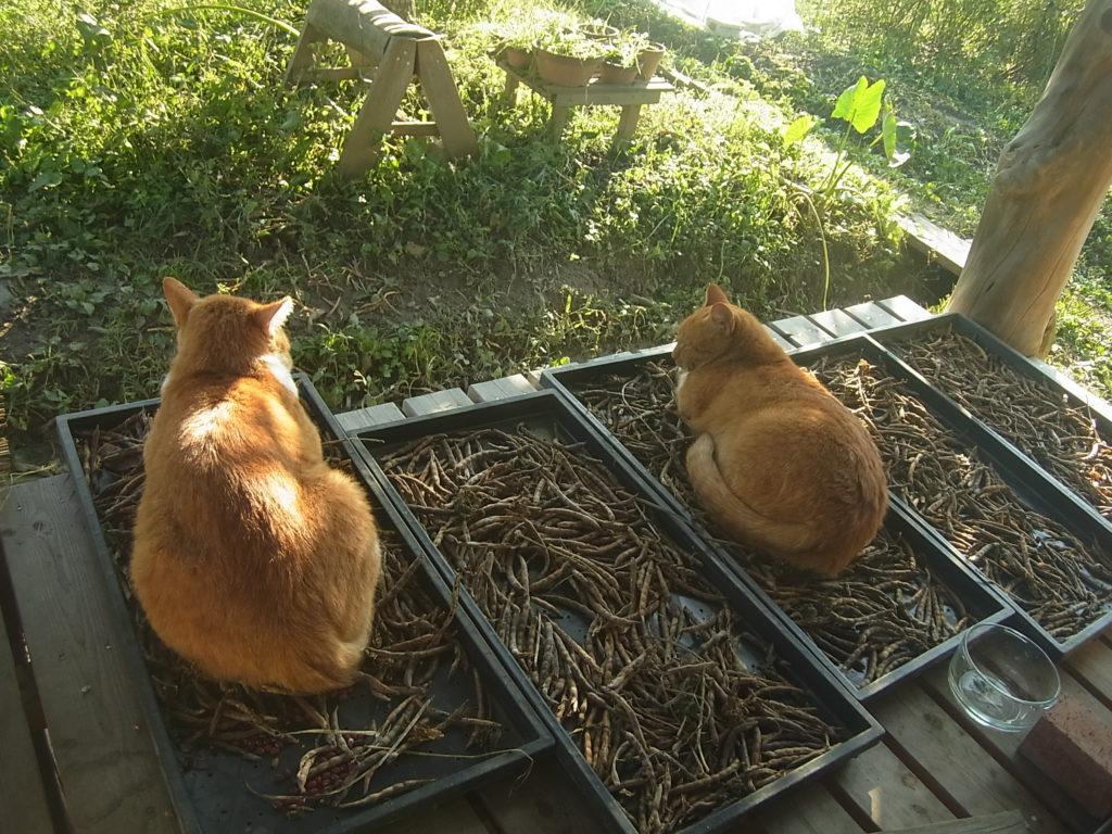 縁側の干しものの上に座る猫2匹。