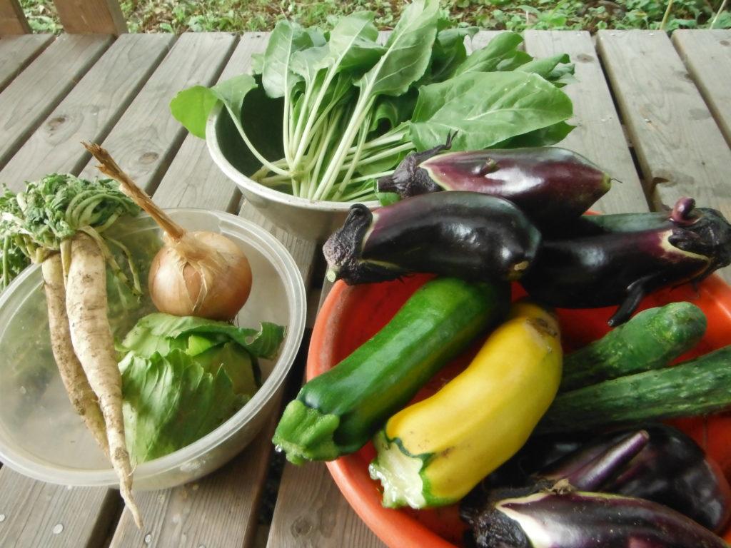 色んな野菜を自給自足。