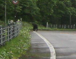 知床峠で、熊に遭遇。