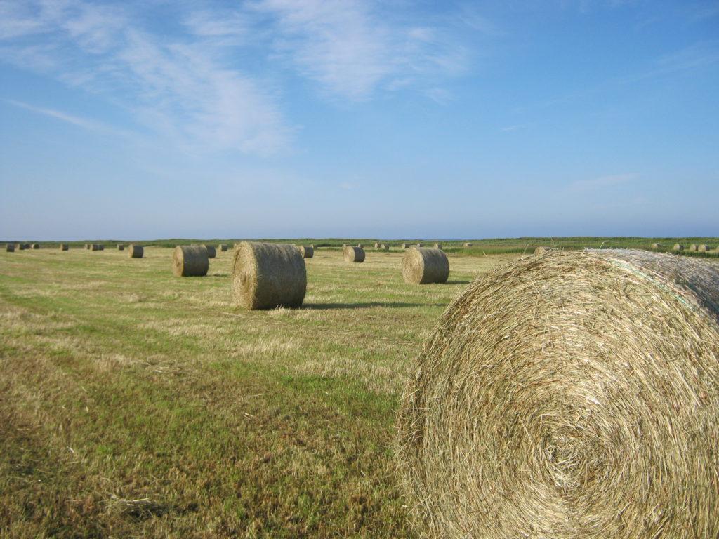 北海道の牧草ロールが並ぶ。