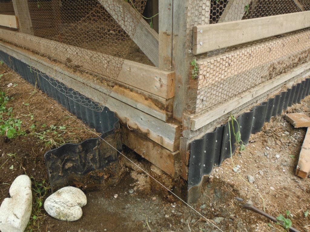 既存の鶏小屋を微調整。