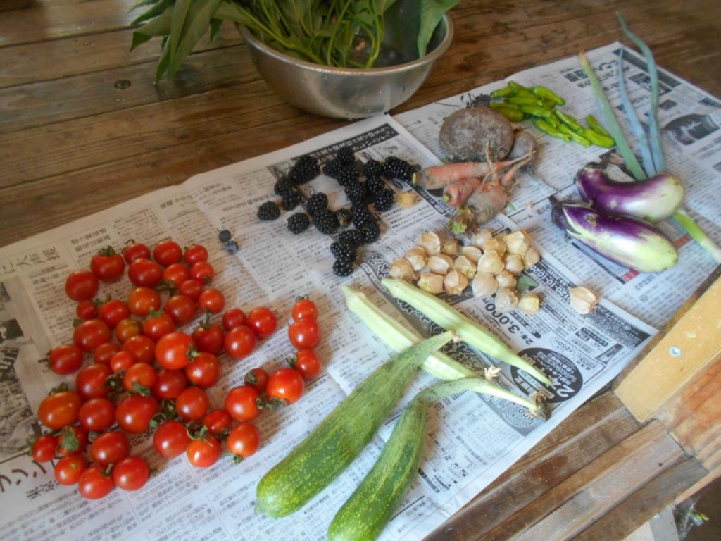 7月の収穫した野菜色々。