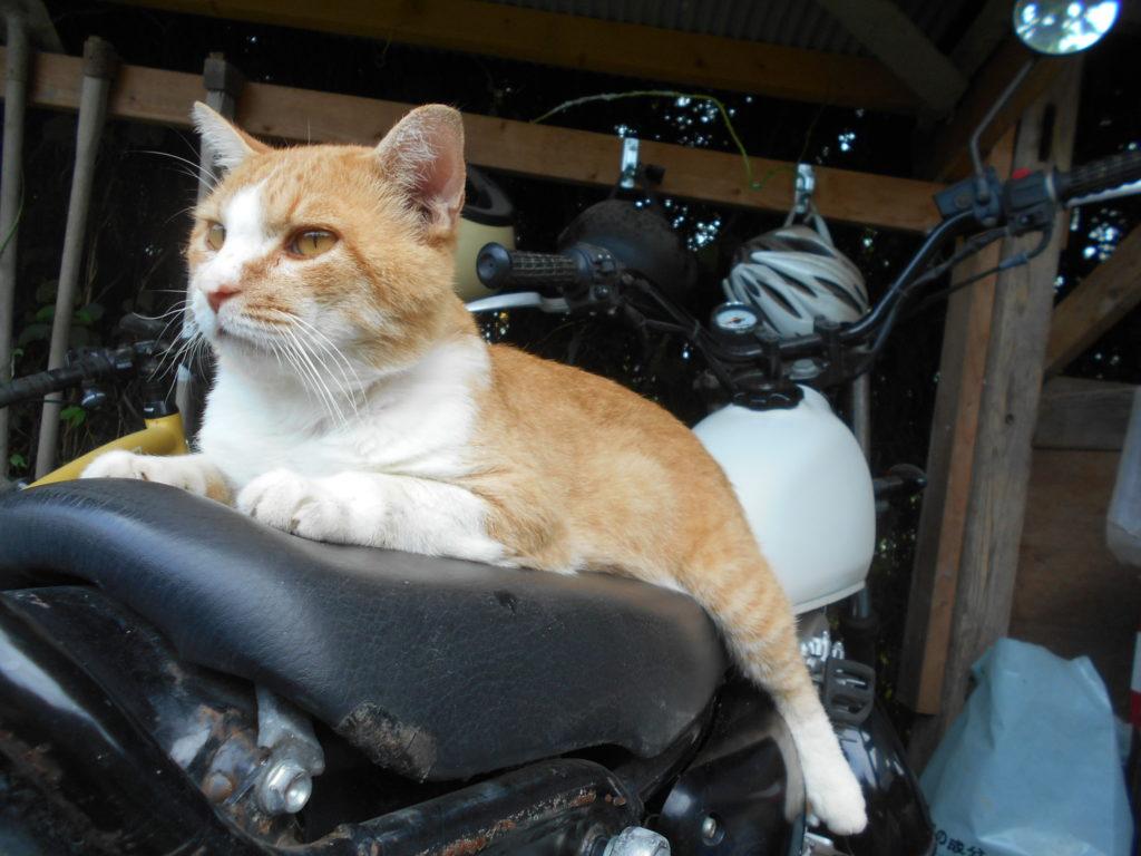 バイクの上の猫のぢん。