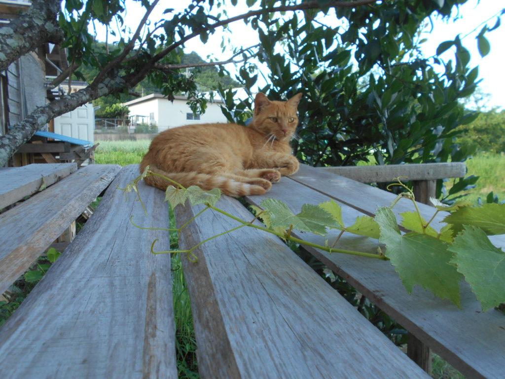 庭の種の上で休む猫のあずき。