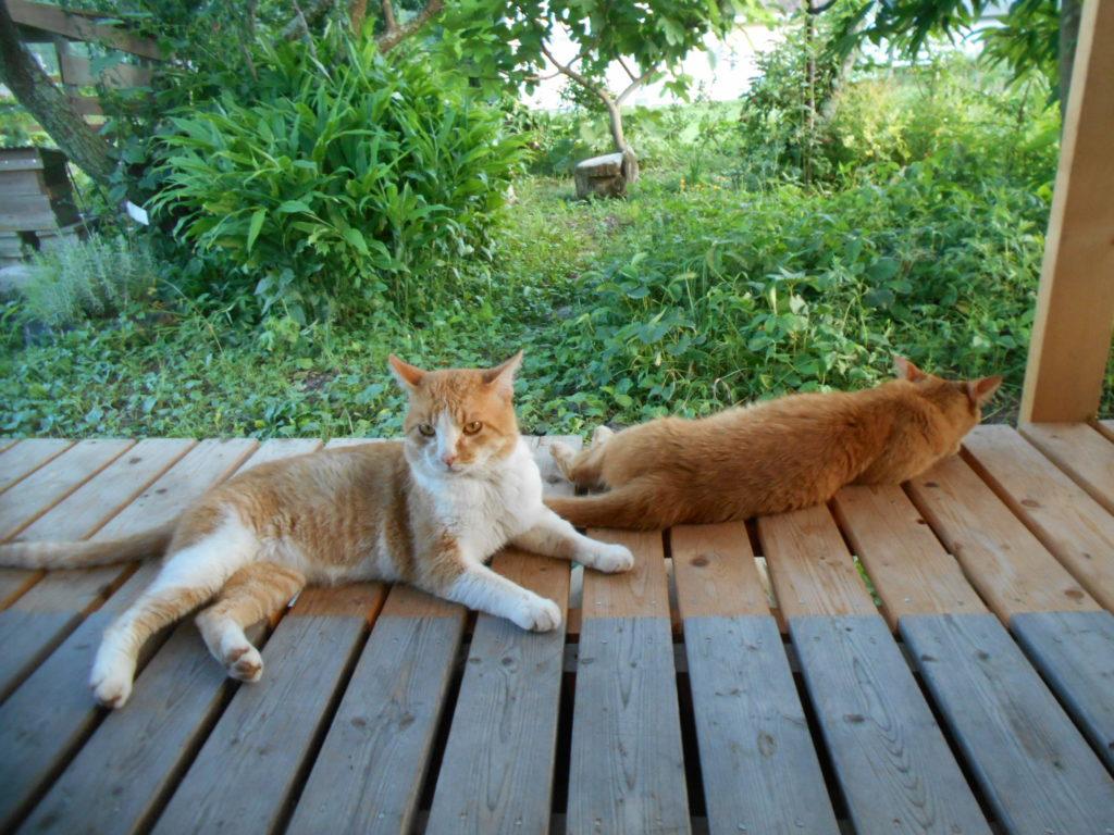 縁側で休む猫ちゃん達。