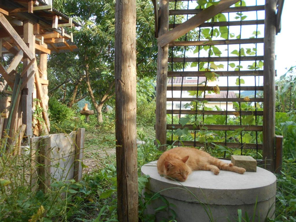 井戸の上の猫2。