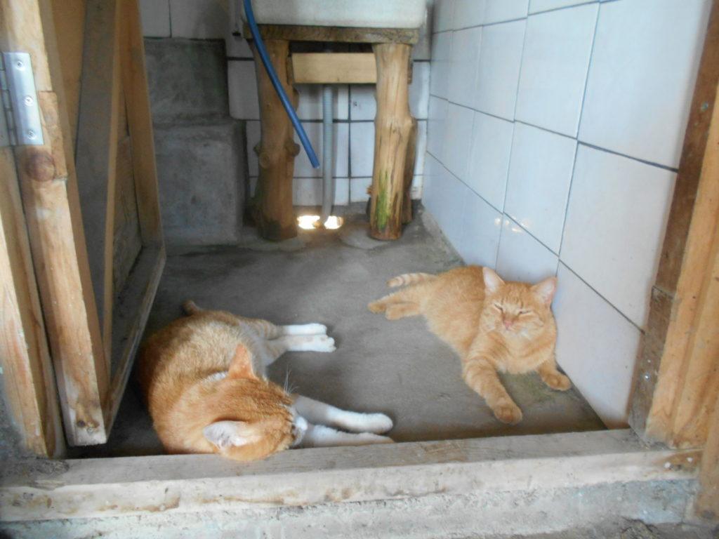 お風呂場で涼をとる猫たち。