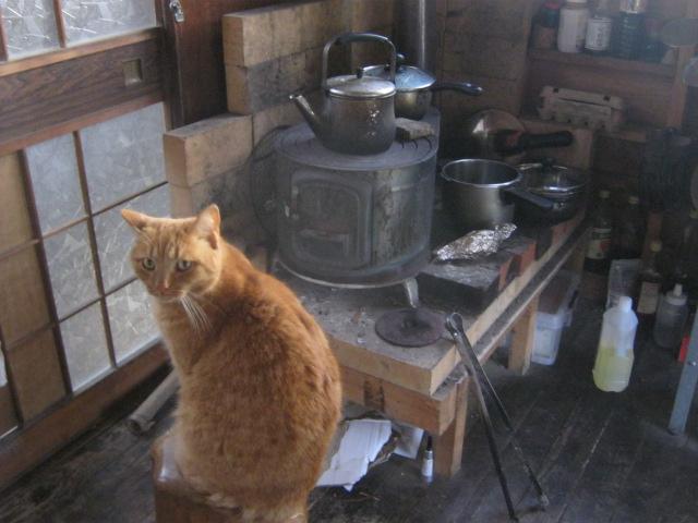 薪ストーブの前で暖をとる猫のあずき。