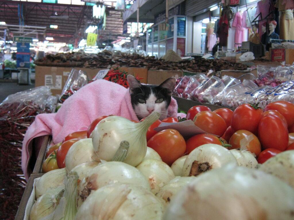 タイの市場で野菜と並ぶ猫。