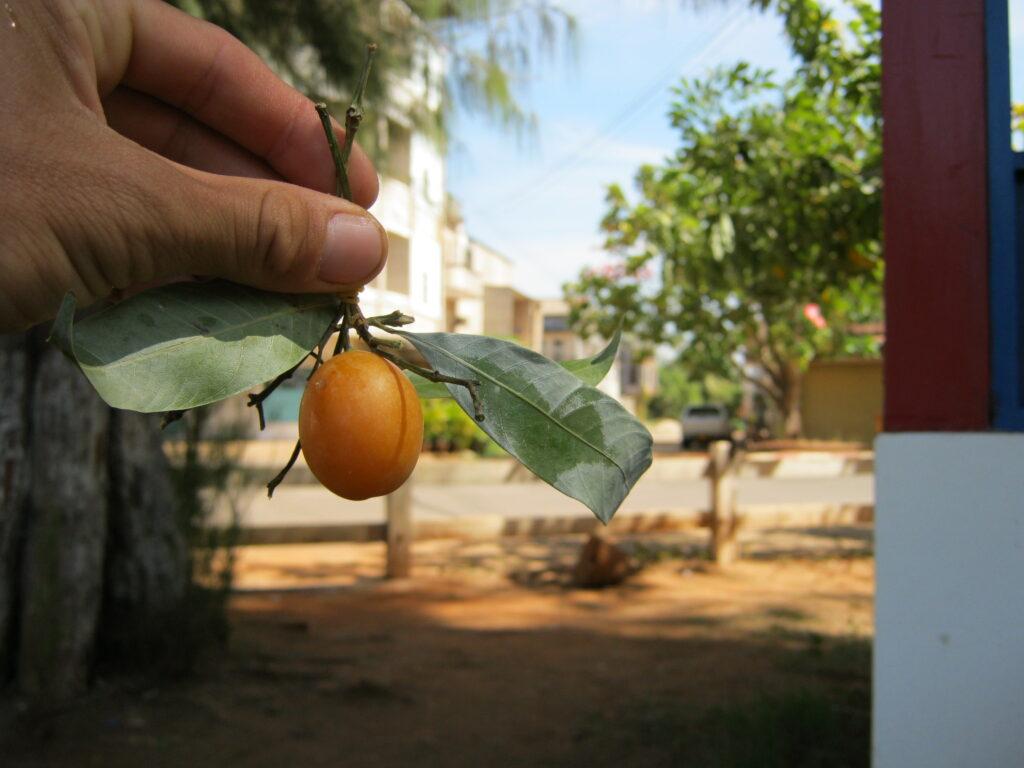 ビワ風のフルーツ。