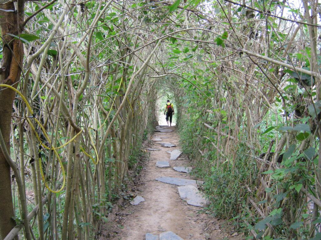 隣のトトロで出てくるような森の小道。