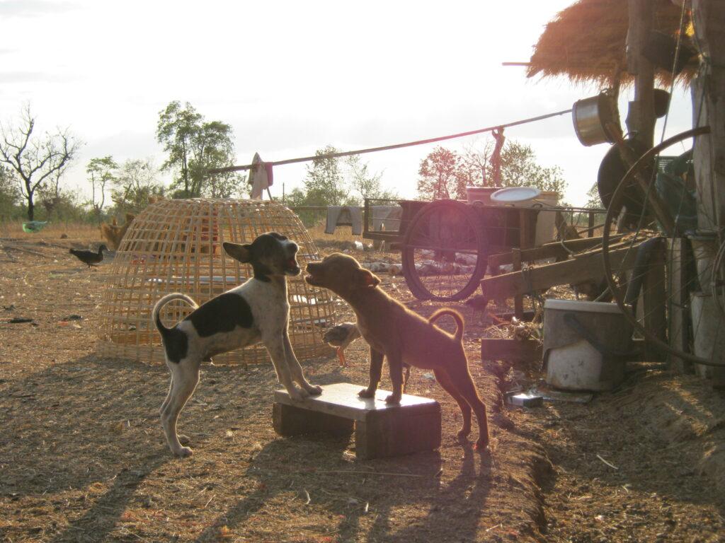 ラオスで見かけた子犬たち。