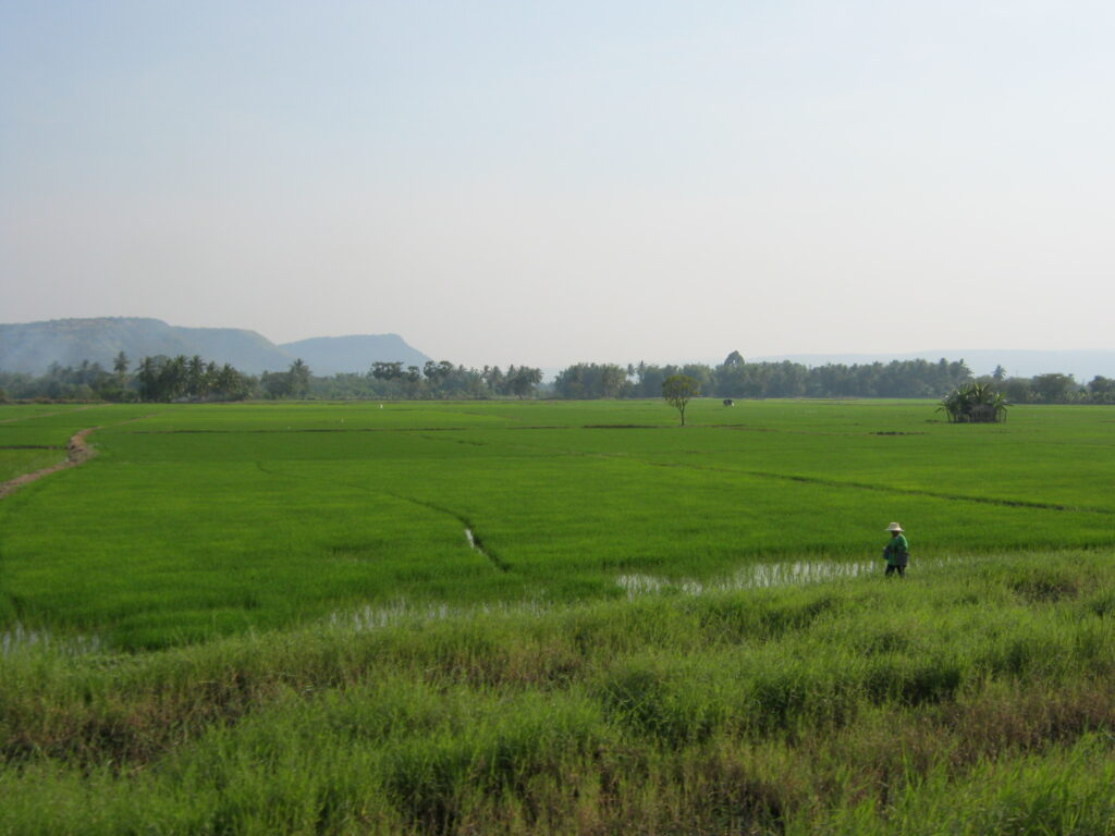 タイの田園風景。