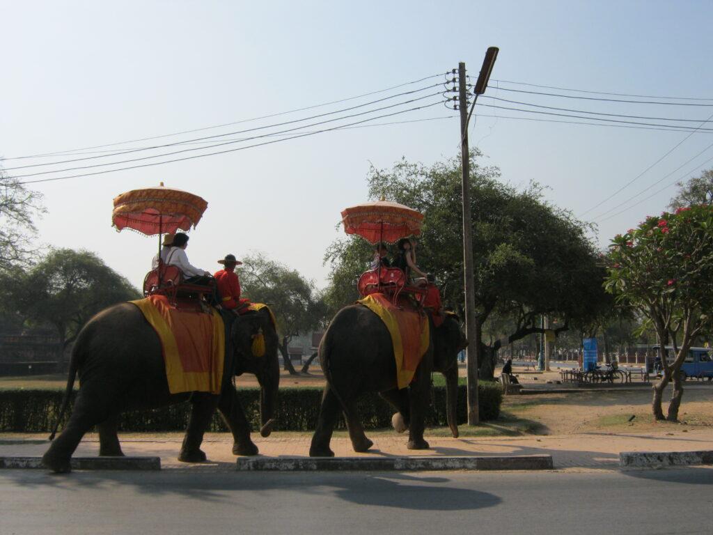 アユタヤの象に観光客が乗っている。