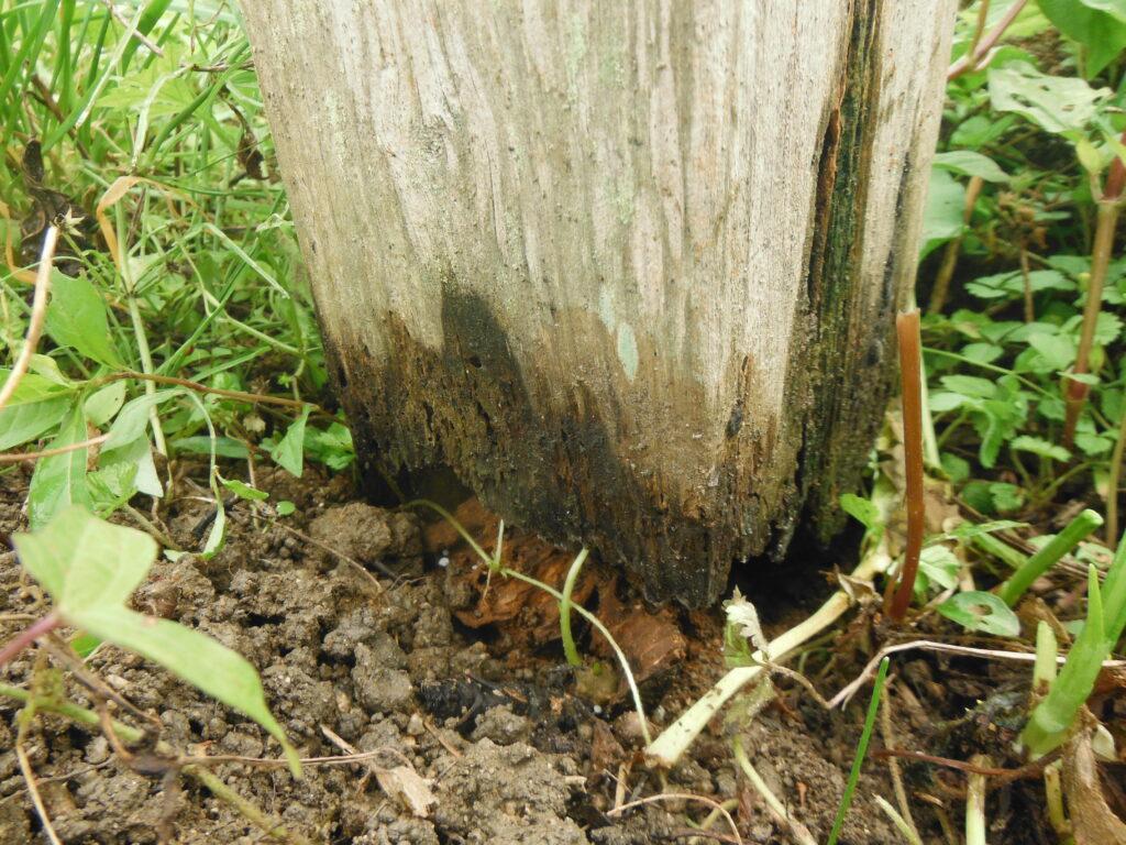 掘立柱が腐る。