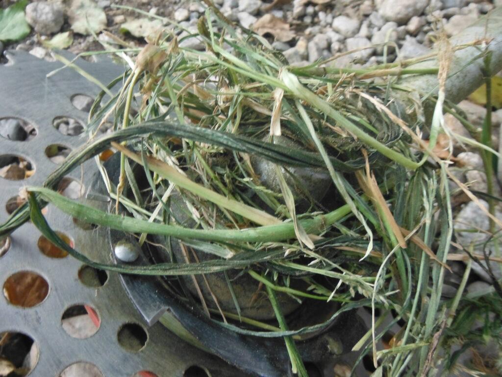 刈払い機に、草が巻き付く。