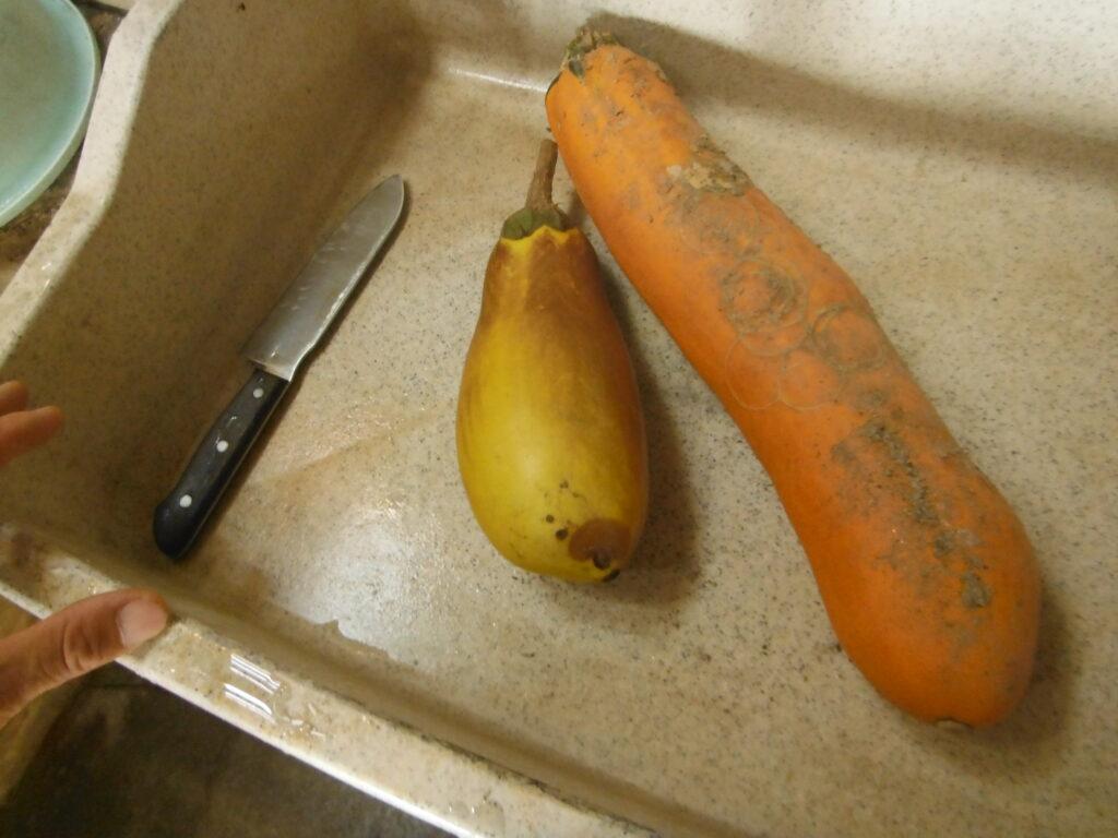 ナスの種を包丁で半分に切る。